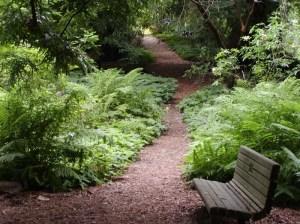 Botanical Garden, Redwood Trail