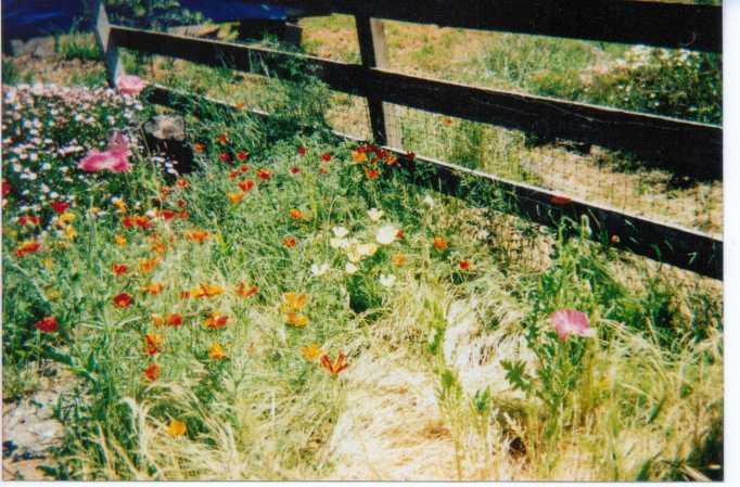 MyWildflowers