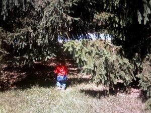 littlegirlbigtrees2